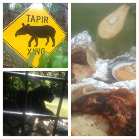 A stop at the zoo to see the tapirs and the jaguars, then off to the harbor in Belize City for a quick picnic.