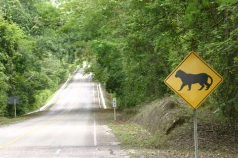 Yeap, we are entering the reserve.  Watch for jaguars, huh?  Well, where the hell are they, then?!