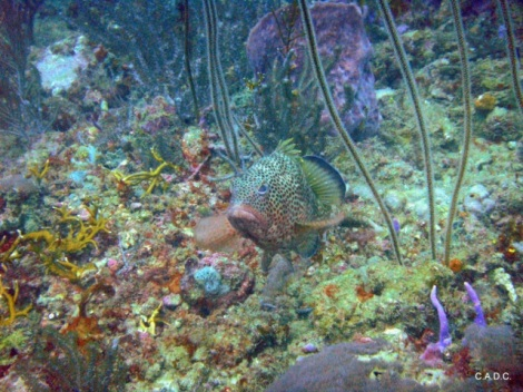 Diving out of Charlotteville - reefs are vibrant and full of sea life!