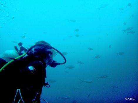 Photo taken by Caroline of Charlotteville Adventure Dive.