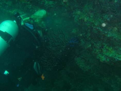 Caroline determined to kill that lion fish…with a rock!  Girl has gotta get a harpoon!